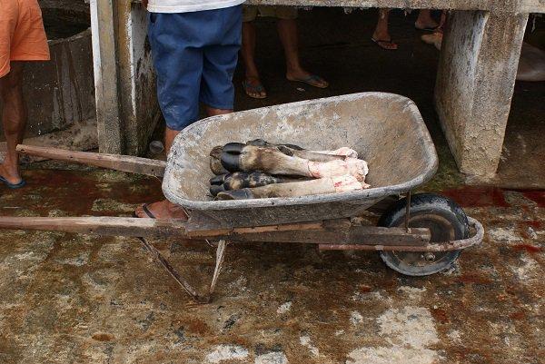 Após serem cortadas e separadas, patas dos boi são transportadas em carrinho de mão